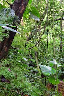 lush tropical vegetation