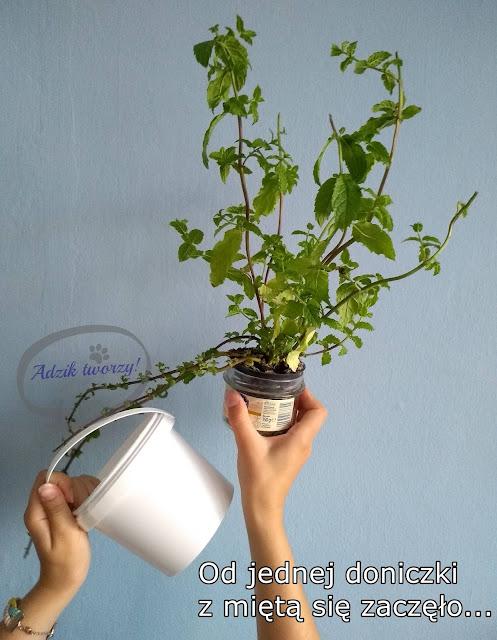 Adzik tworzy - diy ogródek z ziołami na parapecie