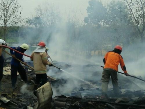 Peternakan Ayam Di Miri Ludes Dilalap Kobaran Api
