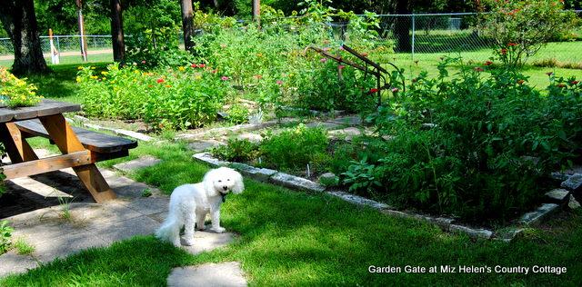 Summer Garden Harvest With Recipes at Miz Helen's Country Cottage