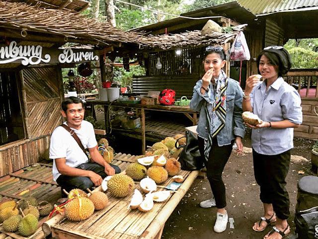 Durian Pelangi: Kampung Durian Desa Songgon Banyuwangi