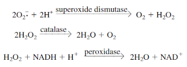 Superoxide radical and hydrogen peroxide