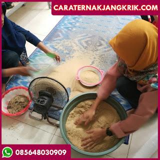 Jual Telur Jangkrik Surabaya