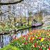 Menikmati Keindahan Surganya Bunga Tulip di Keukenhof Belanda