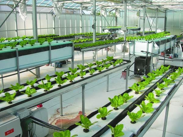 Δυνατό χαρτί του ΤΕΙ Πελοποννήσου το Εργαστήριο Λαχανοκομίας