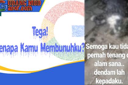 Orang Sinting Pembunuh Kucing Anggora Dengan Ciu Buka Suara! Animal Defender Indonesia Bertindak