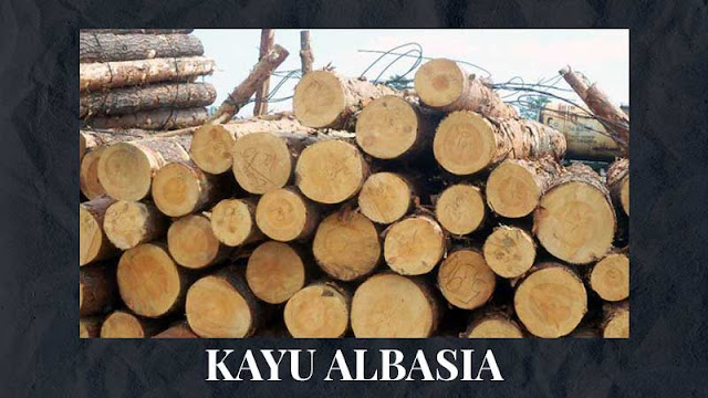 Fungsi Kayu Albasia