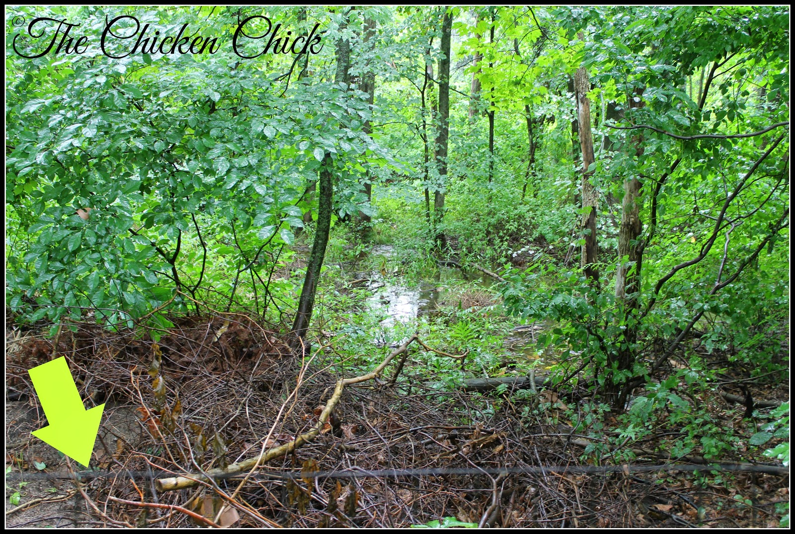 This photo shows the leased land behind our fence (green arrow) which is wetlands and completely unusable.