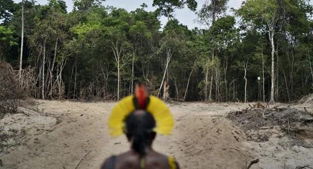 O indígena Paulo Paulino Guajajara foi morto no interior da Terra Indígena Araribóia, região de Bom Jesus das Selvas, no Maranhão, na sexta-feira (1º).