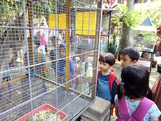 kandang iguana dewasa
