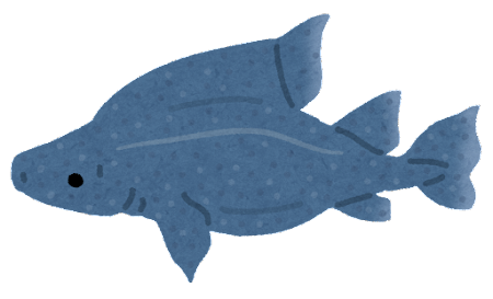 オロシザメのイラスト