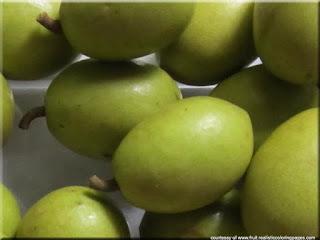 Jalpai (Elaeocarpus serratus) fruit pictures