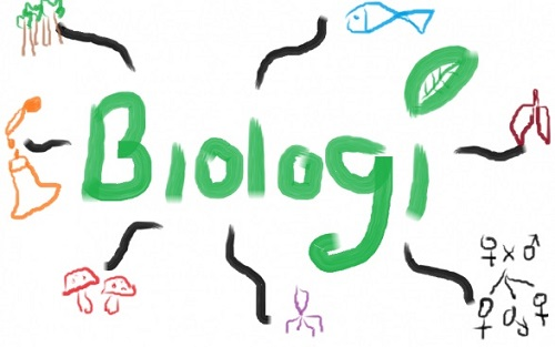 KUNCI JAWABAN Soal Biologi Kelas 10 Semester 2 Kurikulum ...