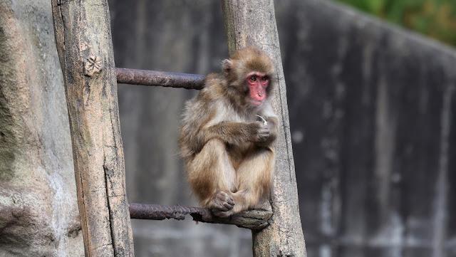 Un investigador se contagia con un raro virus mortal que afecta al cerebro mientras realizaba experimentos en monos