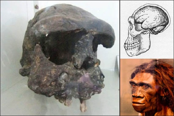 Jenis Manusia Purba Pithecanthropus