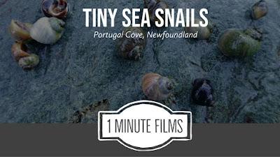 Sea Snails Video