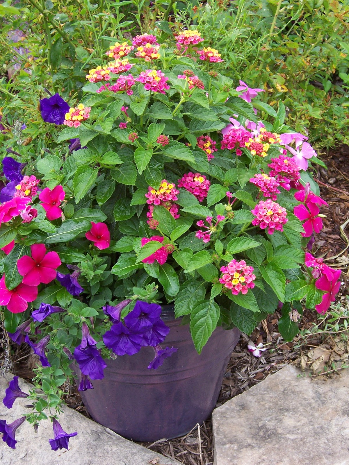 This Garden Cooks! : Back to Basics: Design a Great Container