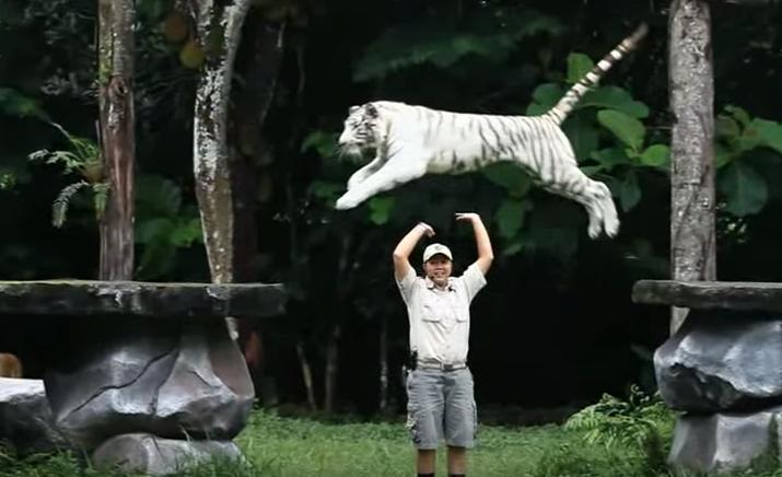 Wisata Taman Safari Prigen Pasuruan Jawa Timur