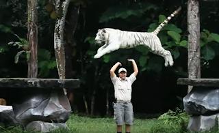 Tiket Masuk Taman Safari Prigen Jawa Timur