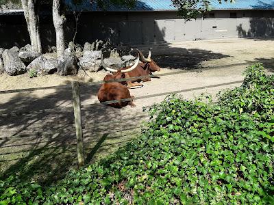 watusi-zoo-de-maubeuge