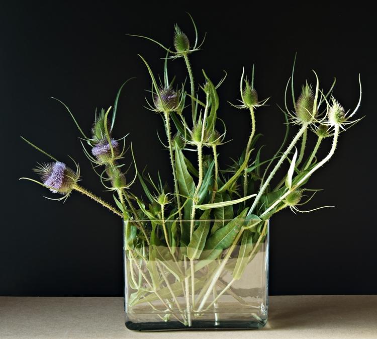Blog + Fotografie by it's me! - Disteln in einer Glasvase