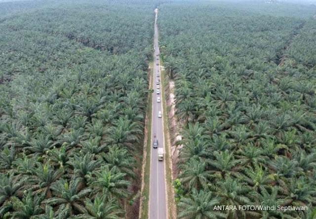Polri akan bongkar bisnis sawit milik Jamaah Islamiyah di Sumatera dan Kalimantan