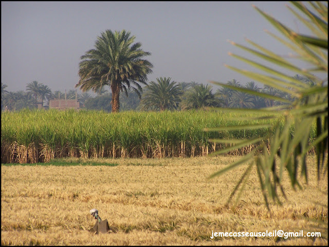 Photos de l'Egypte