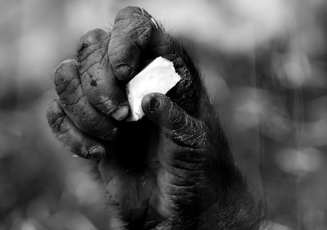 Diana Fossey