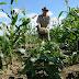 ASSUNÇÃO: Suplente de vereador 'Dagama' parabeniza agricultores pelo seu dia