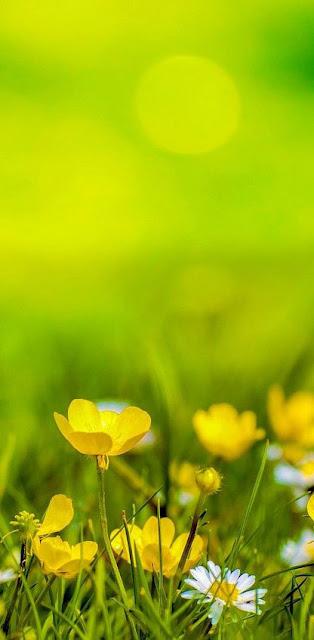 beautiful yellow flower iphone wallaper download