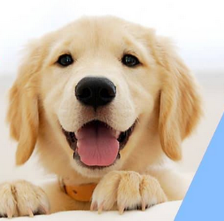 Online shopping portal for Pet Supplies