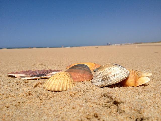 conchas matalascañas