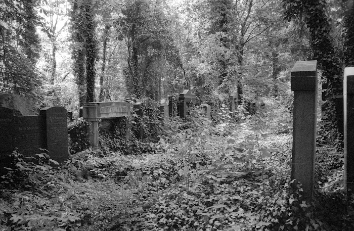 Prague, Josefov, cimetière juif, Starý židovský hřbitov, Kafka, © L. Gigout, 1990