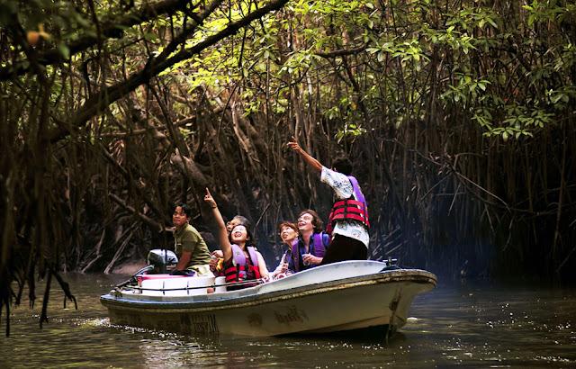 Gambar Bintan Mangrove Di Kepulauan Riau