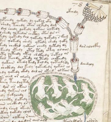 """Dettaglio dalla pagina 78d del Manoscritto Voynich che raffigura la sezione """"biologica"""