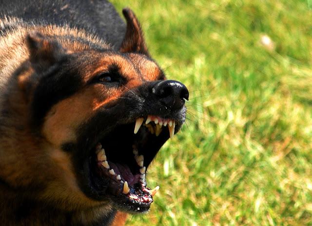 """O que acontece com o ser humano quando ele contrai a """"raiva canina""""?"""