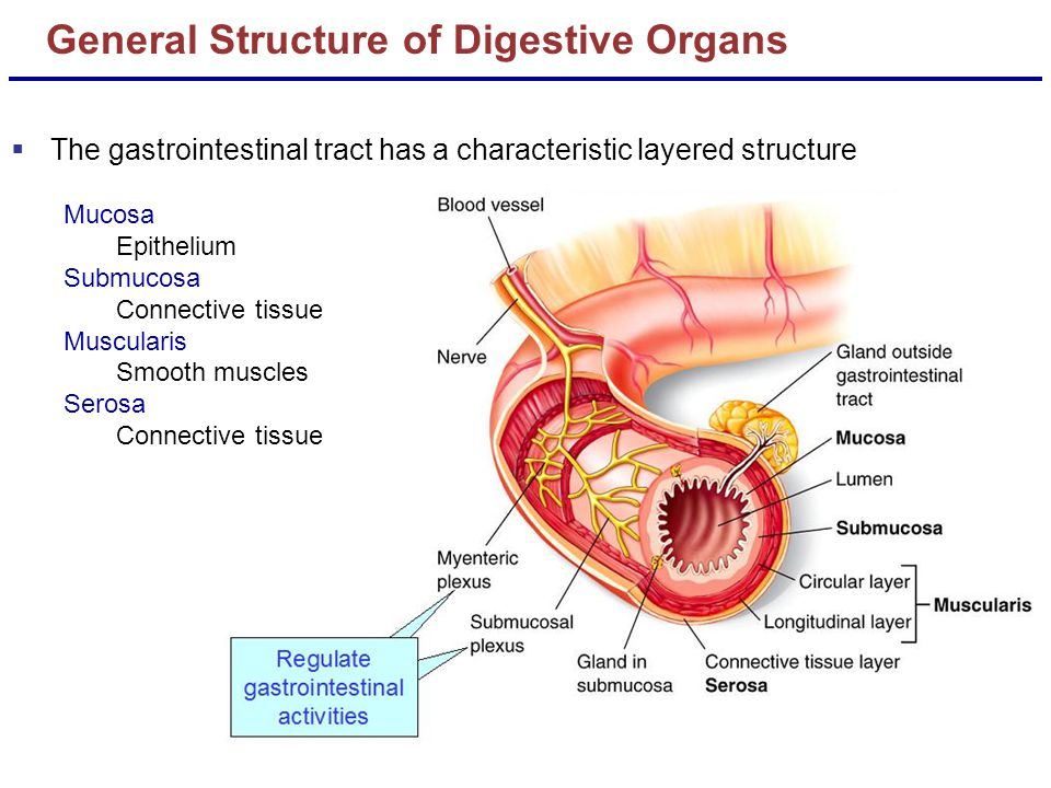 biochem gastrointestine Biochemistry quiz 1 all of the following are carbohydrates except: starch glycogen chitin cholesterol 2 the structure contains which functional group aldehyde ketone amino carboxyl 3.