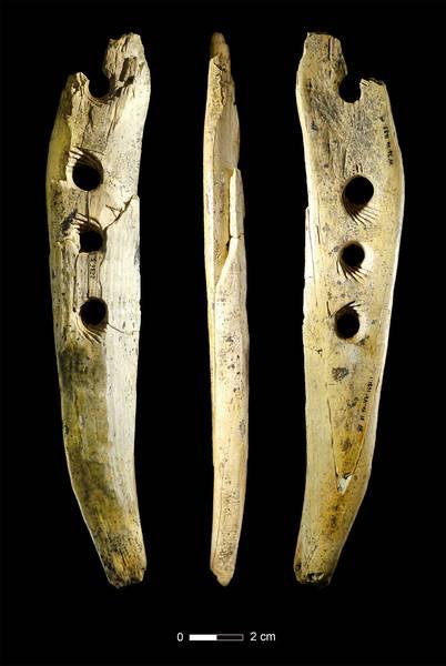 Des chercheurs découvrent comment était fabriquée la corde il y a 40000 ans