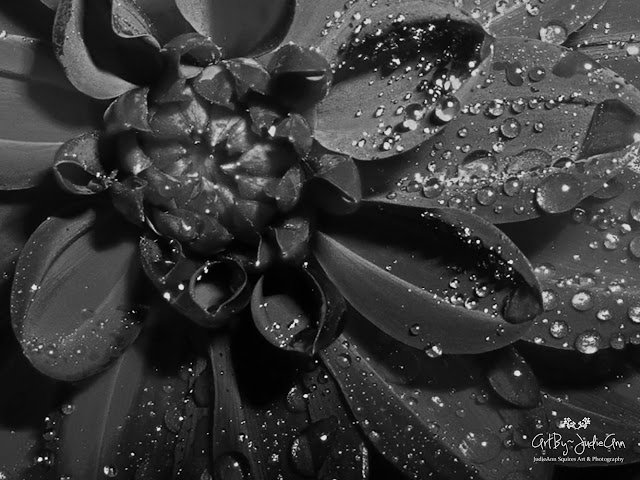 Flowers without Color
