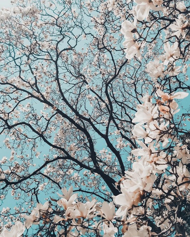 Wiosna!