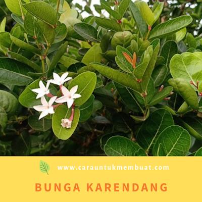 Bunga Karendang