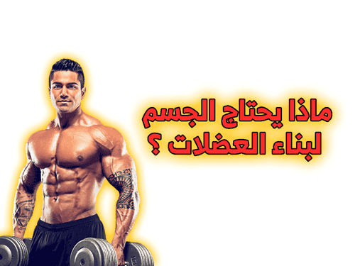 ماذا يحتاج الجسم لبناء العضلات ؟