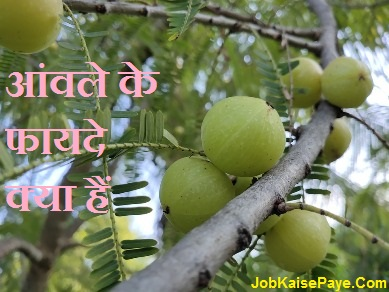 What are the benefits of gooseberry