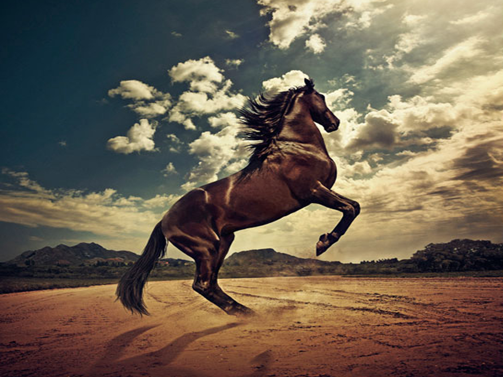 Cool   Wallpaper Horse Mustang - horse-wallpaper+(3)  Graphic_80713.jpg