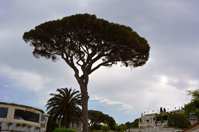 Anacapri shopping tree