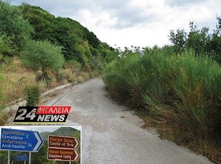 Δρόμος Πετράλωνα - Λυνίσταινα: 'Έφραξε' ο δρόμος από τα δέντρα