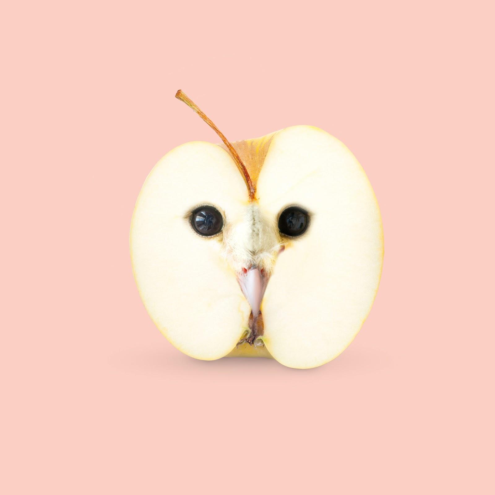 食べ物と動物を合成させた不思議なコラージュ作品【a】|ミライノシテン
