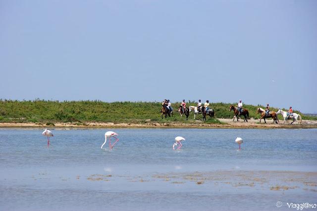 Fenicotteri e cavalli in Camargue - in camper
