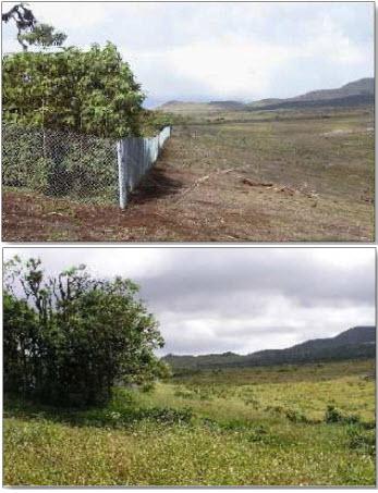 Galapagos Islands restoration