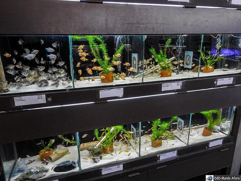 Seção dos peixes no Mercado Municipal de Curitiba: como visitar e o que comprar